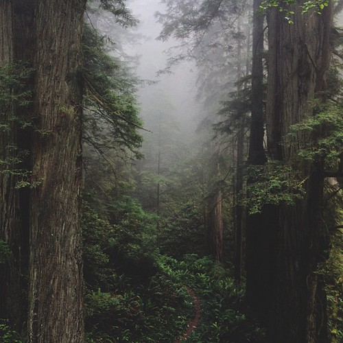 A small trail leads into the foggy Del Norte forest. | by kevinrussmobile