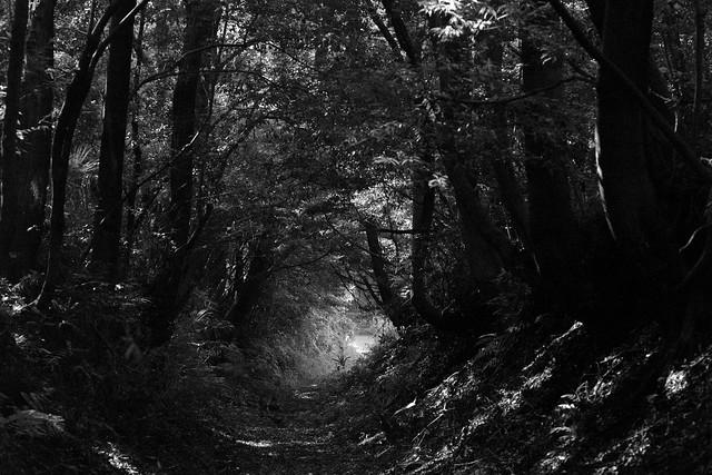 a shady path