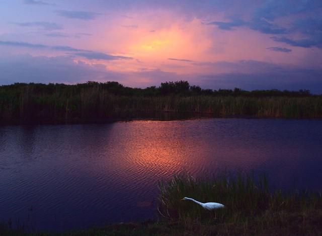 Tranquil Rose~Quarta Sunset 113