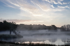 Foggy morning in Jægersborg Dyrehave