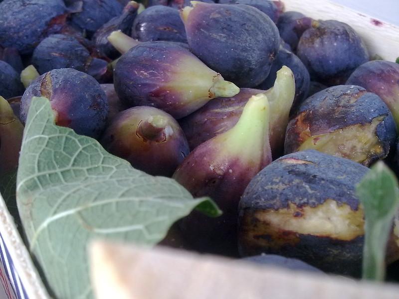 Figs - higos