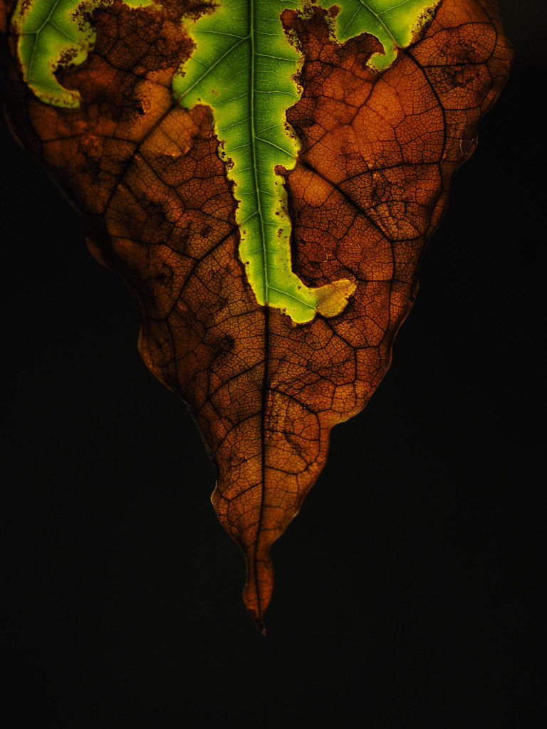 "A map of Life and Death | Macro Monday ""Just Leaves"""
