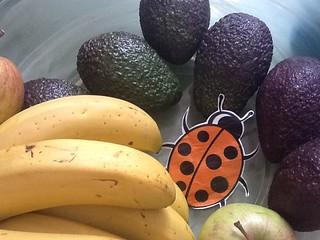 ftt ladybird grills avocados