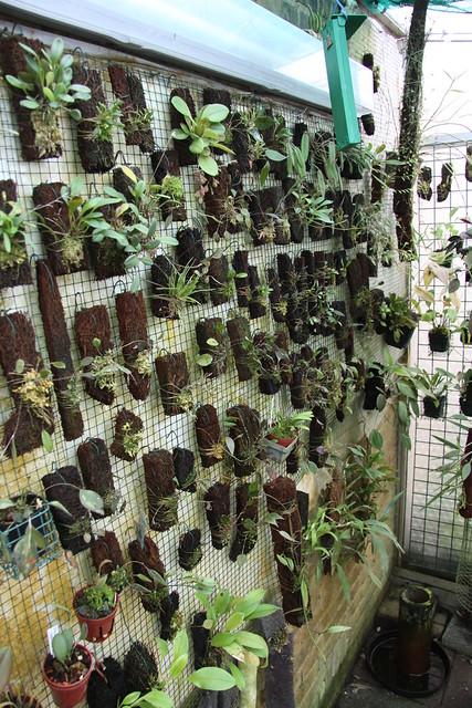 inside greenhouse 3