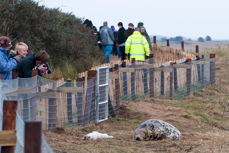 RAF Donna Nook Seals Nov 2012