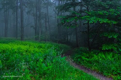 rural landscape virginia countryside spring woods nikon country shenandoah