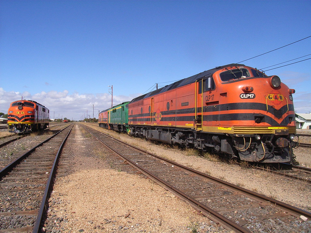 GM42, CLP14, GM38 and CLP17 bathe in the sunshine at Tailem Bend by bukk05