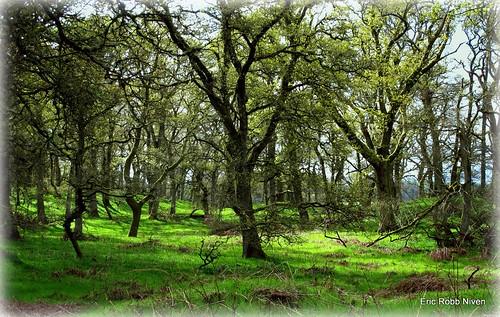 canon scotland spring woods murthly g12 kinclaven ericrobbniven