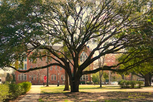 University of Alabama campus | by Harry Lipson III