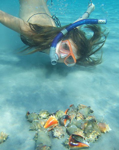 Sophia and fighting conchs