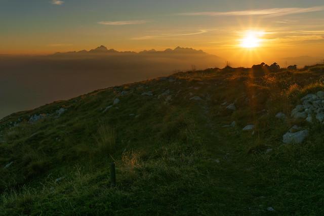 Sheeps enjoying beautiful sunset in the mountains in Slovenia.
