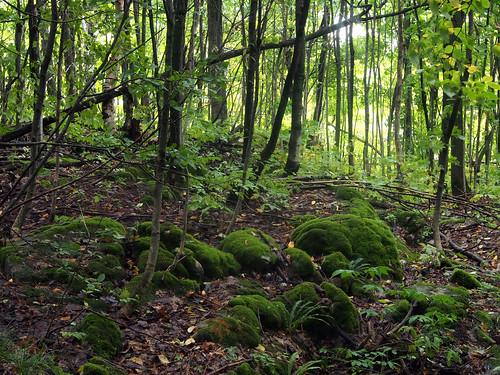 trees ontario canada forest woods rocks collingwood olympus omd em5