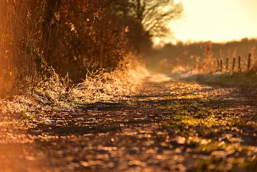 road freezing cold winter december warm light sunset sunlight christmas dutchphoto