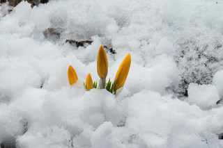 140416 Spring Snow 8322 | by pmaillet photography