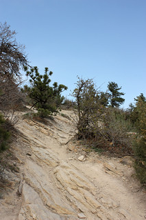 20120411_Dinosaur_Ridge_Park_057 | by Random Michelle