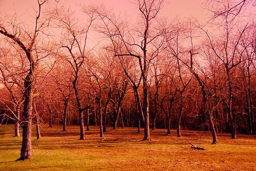 park pink trees sunset ny nature yellow landscape buffalo upstatenewyork warmlight westernnewyork warmtones countypark treeformation chestnutridge