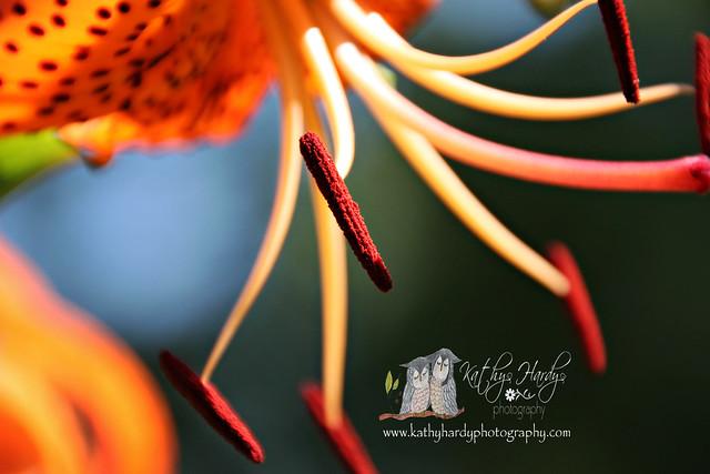 Tiger Lily...