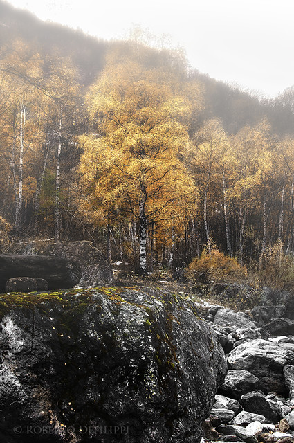 autunno in val Pellice - 2