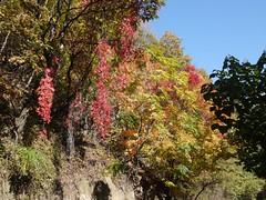 日, 2012-10-21 10:33 - 紅葉