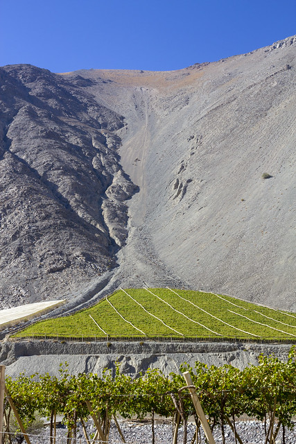 Scree fan, Vineyard, Elqui Valley, Coquimbo Region, Chile