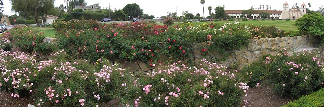 IMG_7874_7 120712 SB Postel rose garden Carefree Delight ICE rm stitch99