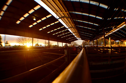 sun sunlight sunrise nikon australia victoria fisheye vic rays gippsland warragul saleyards d5100 nikond5100 phunnyfotos bawbawlivestockexchange
