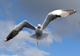 Gull   by tomp77