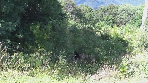 OMG, a Bear!!