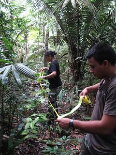 Serano and Gisèle setting up a vegetation plot
