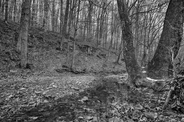 Little Creek B & W
