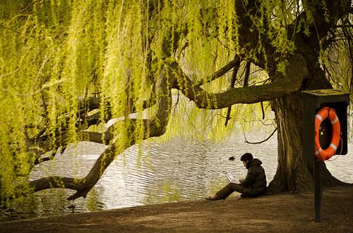 Working Under a Willow | by garryknight