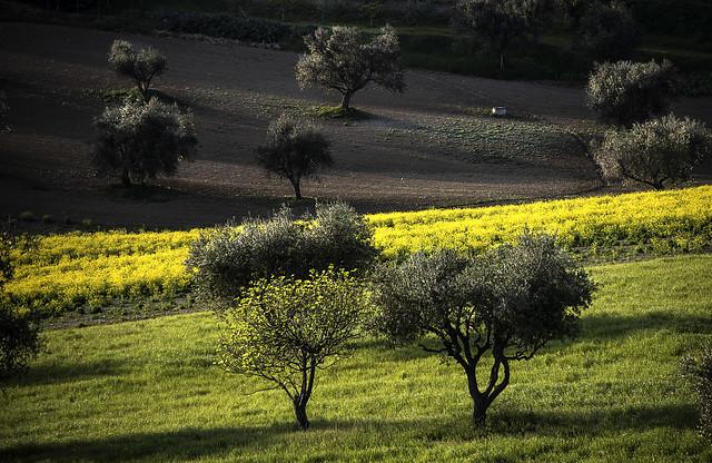 olivi e colori
