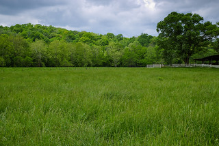 Field and Tree | by Vincent1825