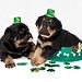 Studio Puppies