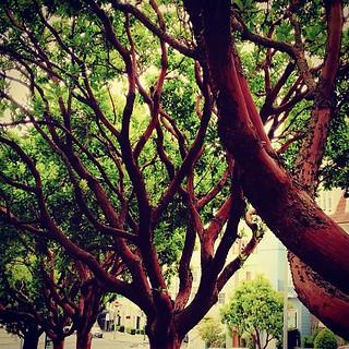 strange trees on my street. | by sarahwulfeck