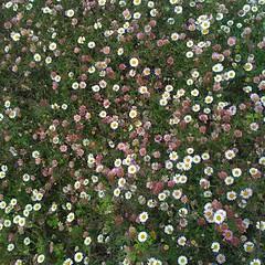 Ferndale flowers