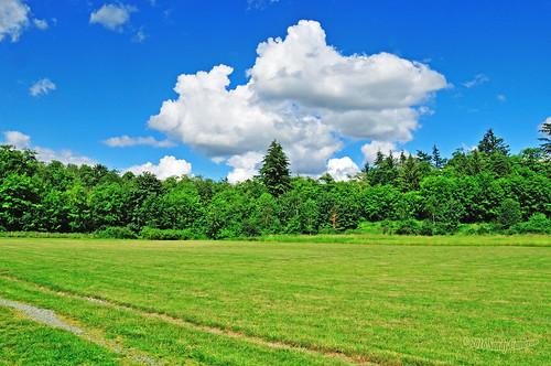 landscape scenic serene tranquil blue sky clouds green grass field trees grassland nature abbotsford lowermainland bc britishcolumbia canada nikond300 nikon