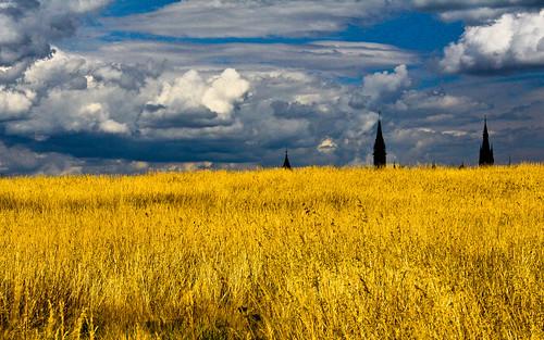 Wheatfield   by cjuneau