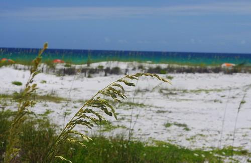 beach gulfofmexico florida dunes destin seaoats miramarbeach campingonthegulf