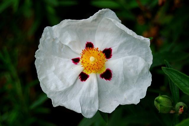 Flower 2012