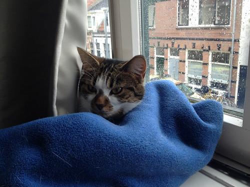 Comfy Blanket | by Daviddje