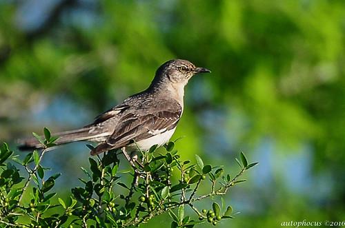 sunlight bird water grass birds feeding flight feathers avian goldenhour plumage animalworld