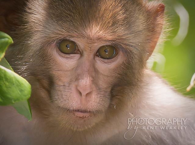 18~P52 Monkeying