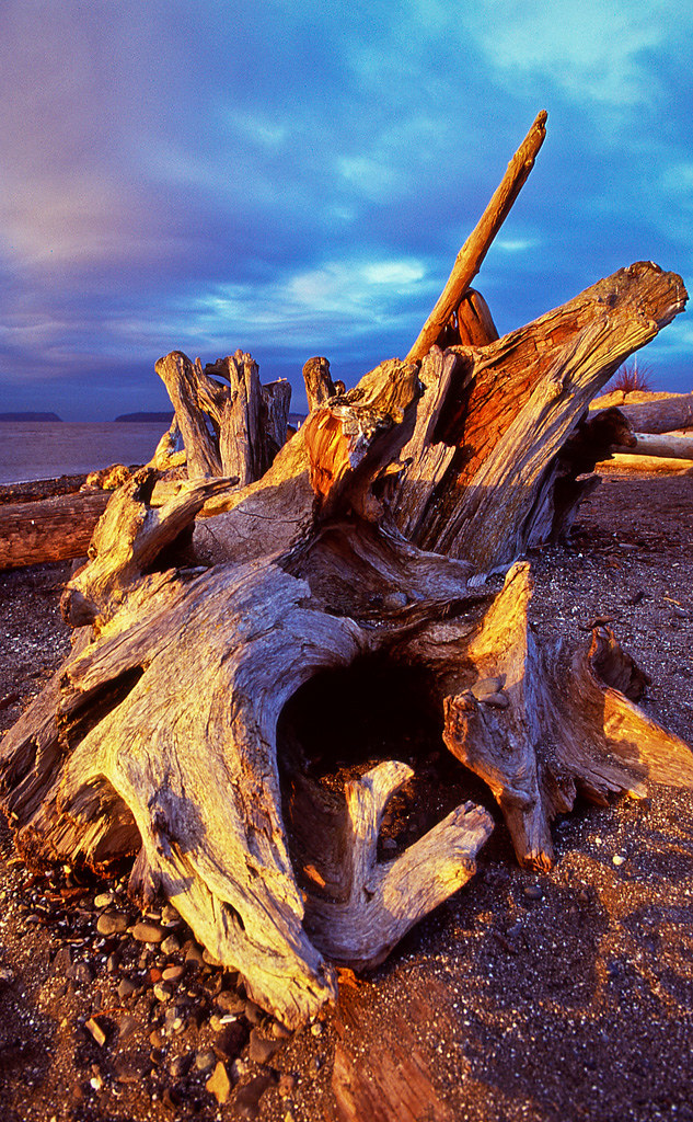 Drift Wood at Sunset