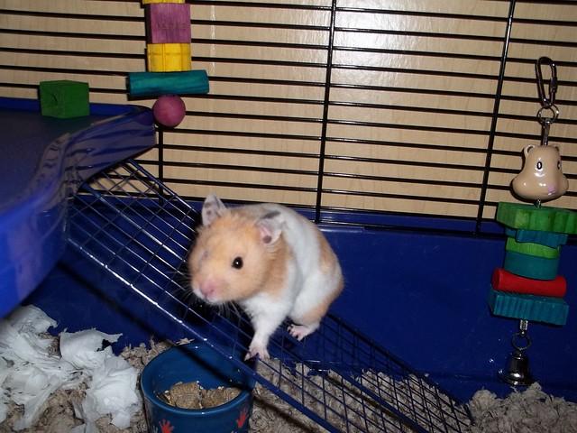 Here's Chowder!