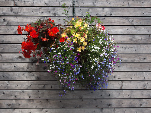 Hanging Flower Basket | by Real Group Photos