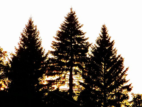 sunset ontario canada silhouette kingston aviary mypics pinetrees easyshare