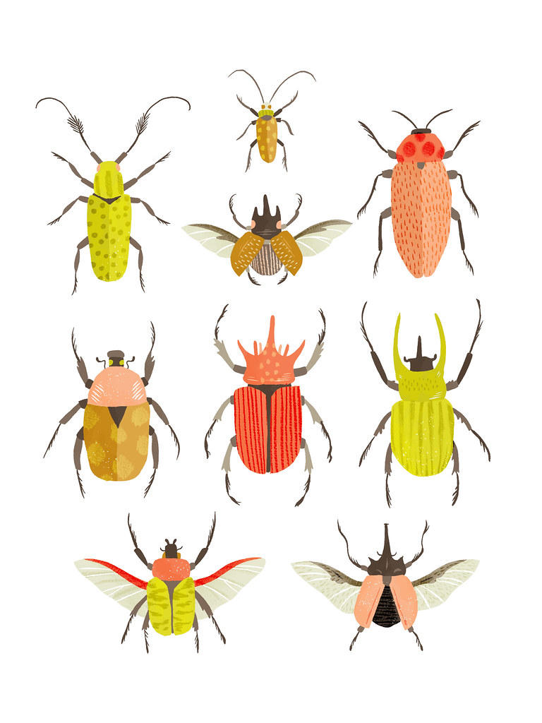 Beetle Identification Chart | Personal Work Available here
