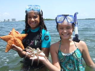 Starfish collectors