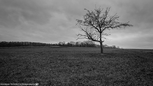 The lonely Tree under the stormy Sky 2.